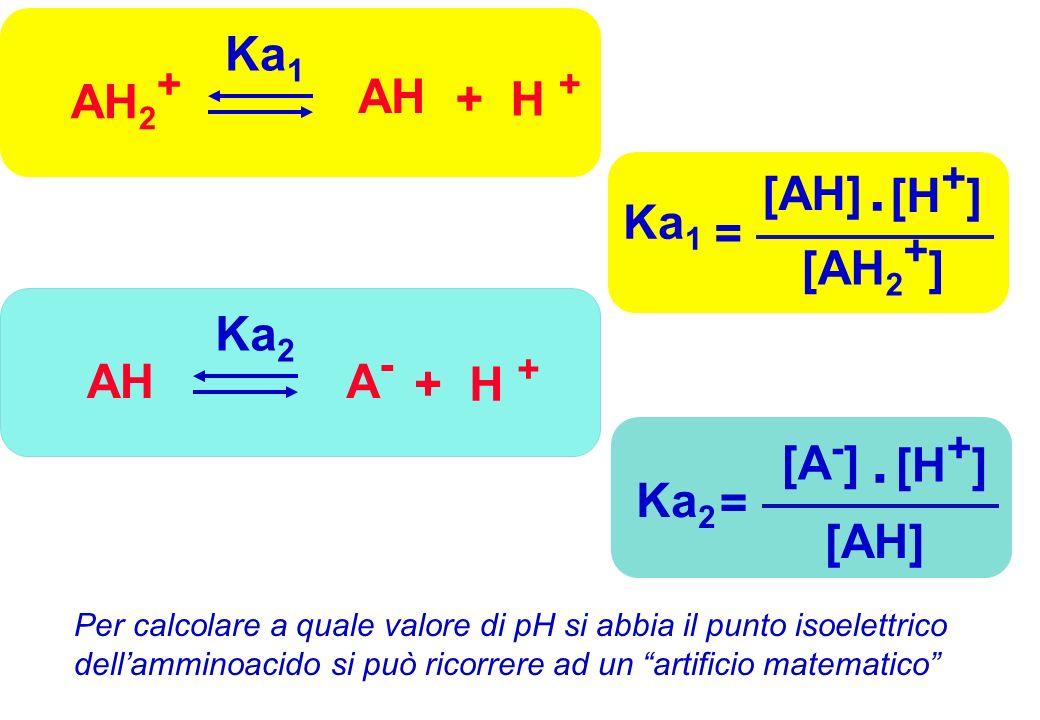 . . AH2+ AH + H + Ka1 Ka1 = [AH] [H+] [AH2+] A- AH + H + Ka2 Ka2 =